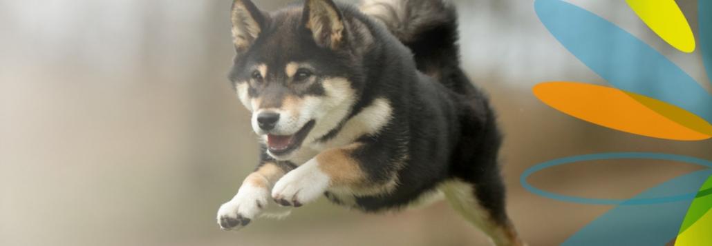 kutya vakarozas