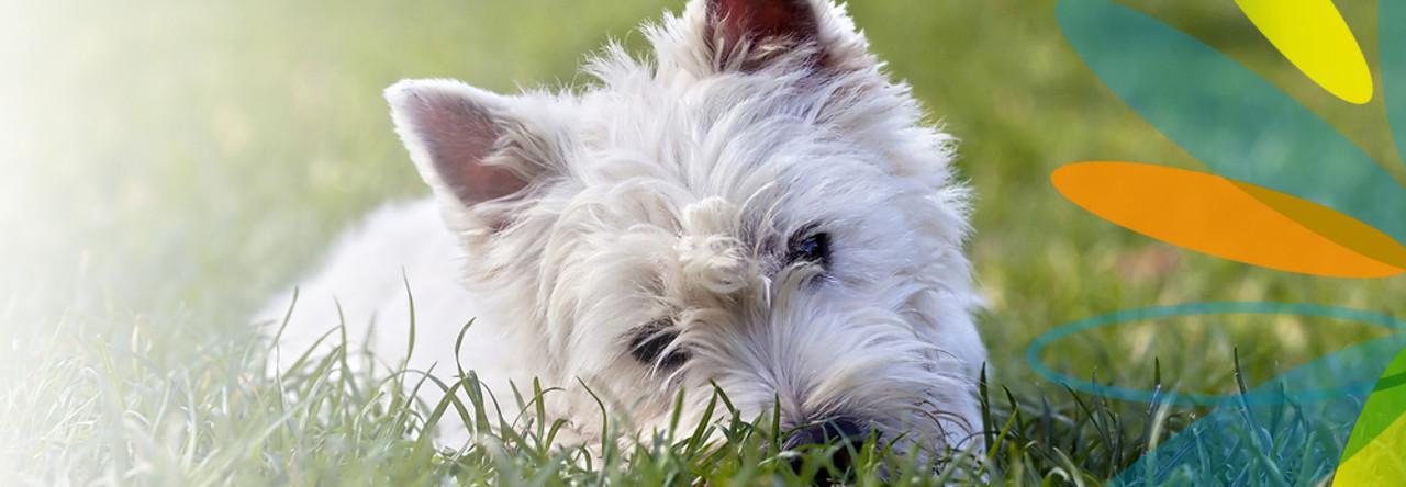 Boldogabb kutyus