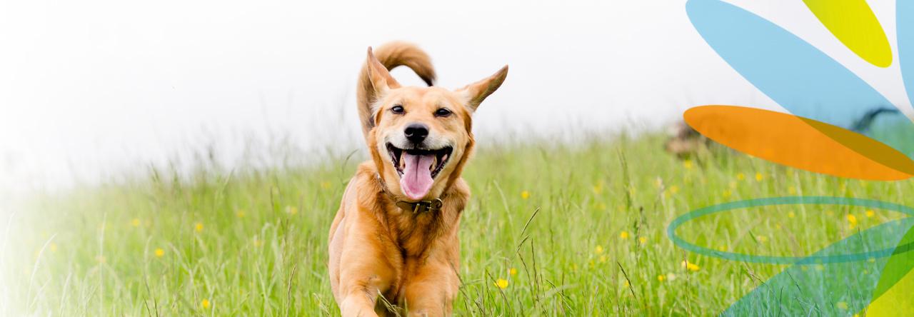 E-vitamin a kutyaknal