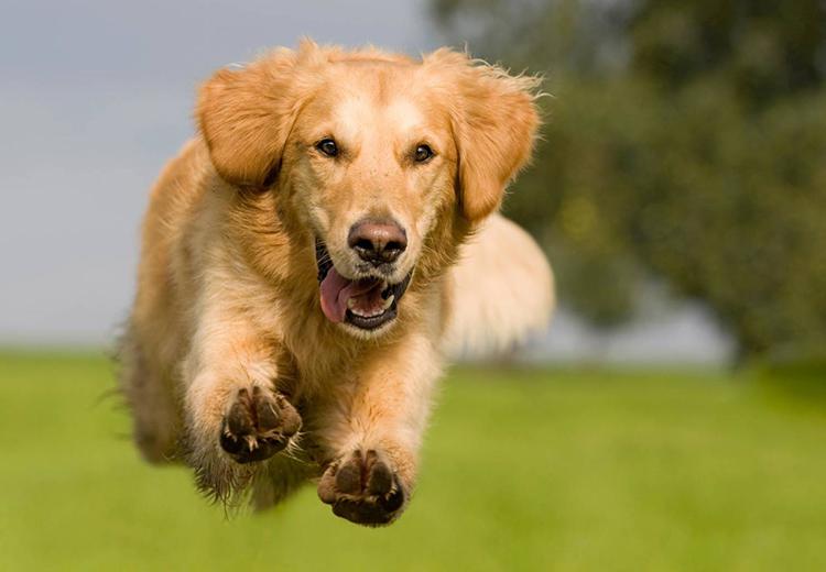 vitamin kutyaknak