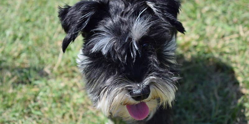 fel a tuzijatektol a kutya