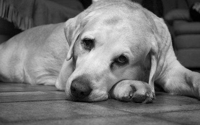 izulet vedelem kutyaknal