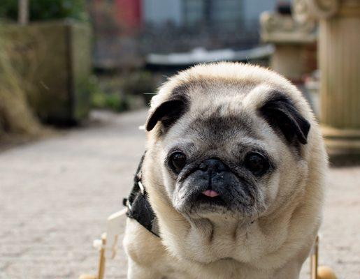 izuletvedo kutyaknak