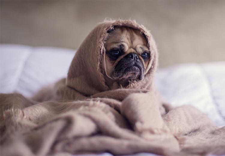 kutya gyomorrontas ellen