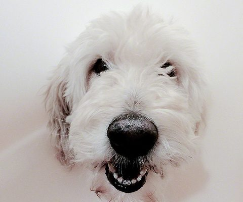 kutya szorhullas ellen