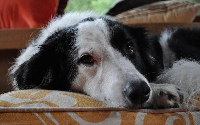 kutya vitamin hiany tunetei