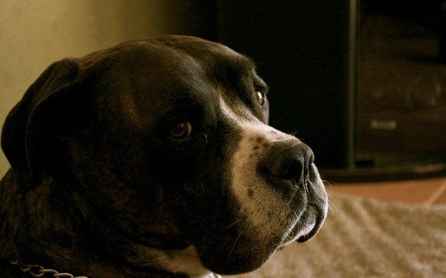 legjobb csonterosito kutyaknak