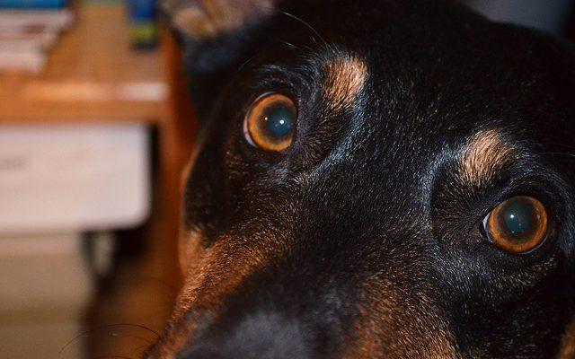 legjobb kutya vitamin