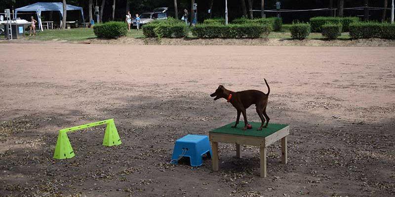 nyugtalan kutya