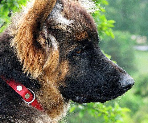 omega 3 kutyanak