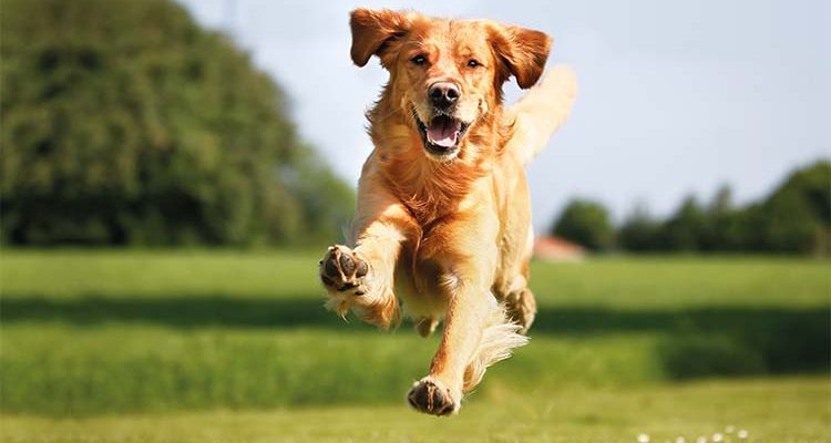 izuleti problemakra kutyaknak