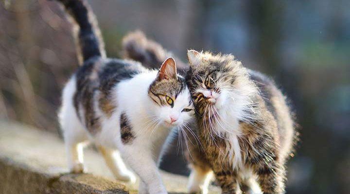 izuleti problemakra cicáknak