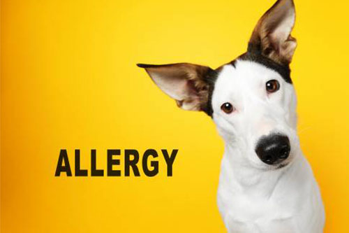 allergiás kutya